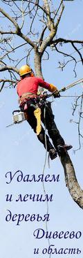 Удаляем и лечим деревья. Арбористика вам на помощь