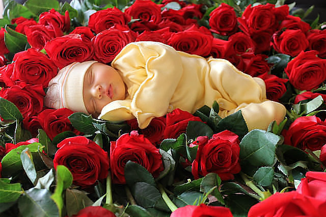 Малыши красивых цветов