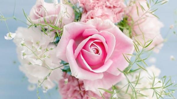 картинки на рабочий стол красивые цветы розы № 444895 без смс